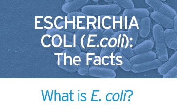 ecoli-facts
